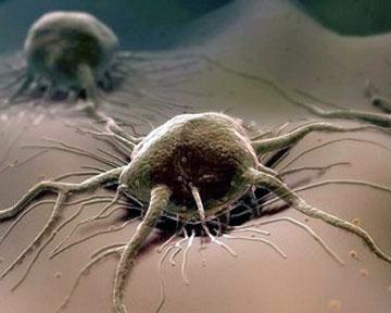 Рак и прополис