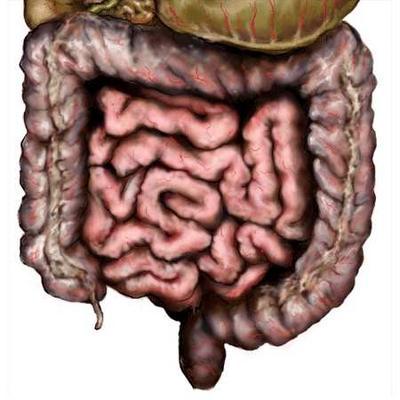 очищение кишечника от паразитов тройчатка эвалар