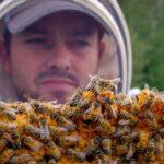 После длительной зимовки в Канаде погибло много пчёл