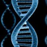 Антимикробные пептиды - это врожденные компоненты иммунной системы