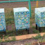 Заключенные в Омской области будут разводить пчёл