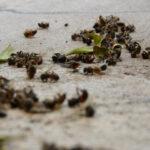 Установлен патогенный вирус, который массово заражает пчел