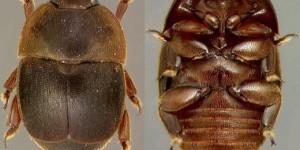Италия пытается остановить распространение малого ульевого жука