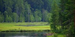 Разнотравные лесные луга в таёжной Сибири