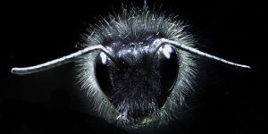 Пчёлы ощущают электрические поля. Открытие ученых