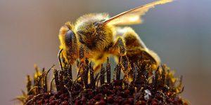 Интеллект пчёл