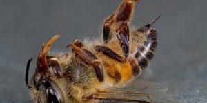 Причины массовой гибели пчёл