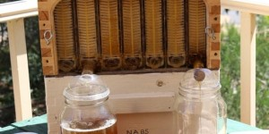 Улей «Flow hive» бьёт рекорды продаж