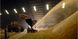 Сахар, виды сахара и их история