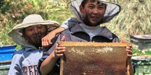 1800 пчелопакетов из Киргизии остановили  в Курганской области