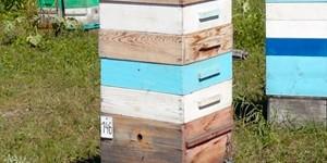 Продажа пчелосемей в Красноярском крае 2018