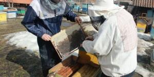 Выставили пчёл. Открытие 2016 сезона