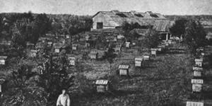 Основные приемы сибирского пчеловода Д.Т. Найчукова