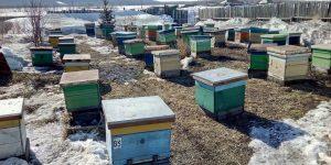 Выставили пчёл в Красной Речке. Результаты...