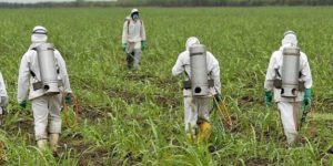 Популярный гербицид глифосат убивает иммунитет пчёл