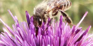 Левши и Правшы среди пчёл