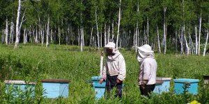 Заседание комитета по развитию пчеловодства Красноярского края. Август, 2018