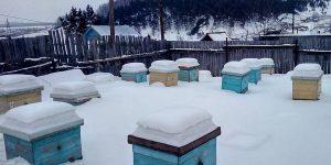 Выставили пчёл. Зимовка прошла успешно.