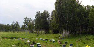 В Сочи хороший урожай мёда (Видео)