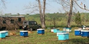 Заседание комитета по развитию пчеловодства Красноярского края. Январь, 2018