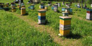 Свежий мёд 2016 уже в Красноярске