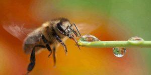 О породах пчёл. Какая пород пчел лучше? О глупых пчеловодах