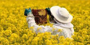 Второе заседание комитета по развитию пчеловодства Красноярского края