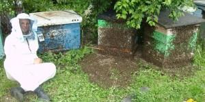 Содержание пчёл в 16-и рамочных ульях, или 50 лет спустя