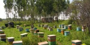 Привезли пчел с кочевки