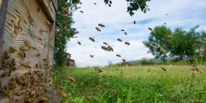 Алтайский край занимает первое место в СФО по производству мёда