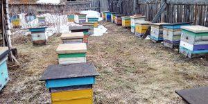 Выставили всех пчел. Перезимовали отлично!