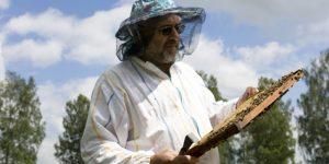 Пчеловодство в начале 90-х годов. Цифры