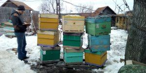 Открыли новый сезон 2019. Выставили пчёл.