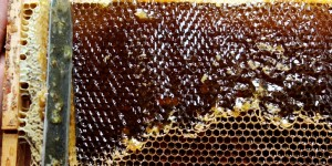 Свежий таёжный мёд в Красноярске