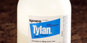 Новый антибиотик против американского гнильца в США