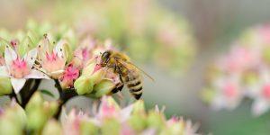 В Австрии соседа посадили на целый год за отравление пчёл