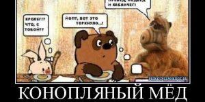 Марихуановый мёд от Николаса