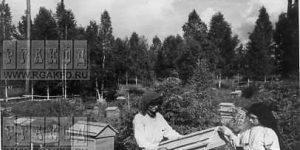 Достижения сибирского пчеловода Иванова Д.И.