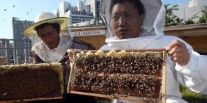 Городское пчеловодство в Южной Корее