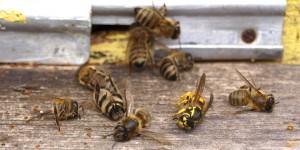 В Волгоградской области отравили 1000 пчелосемей