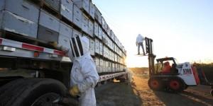 Состояние пчеловодства в США 2014/2015