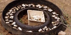 Поилка для пчел из автомобильной шины несёт вред