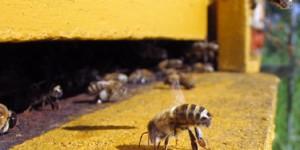 Инструкция по содержанию пчелиных семей