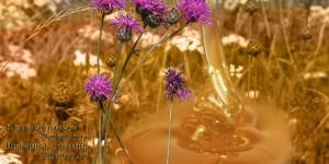 Свежий васильковый мёд в Красноярске