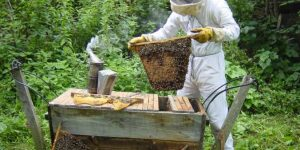 Безрамочное, безвощинное биодинамическое пчеловодство