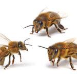 Пчёлы способны строить мысленные карты