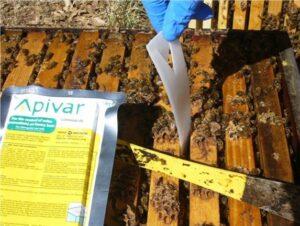Apivar уничтожает 99% клещей варроа всего за одно применение