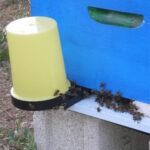 Подкормка пчел сиропами - одна из вероятных причин КПС