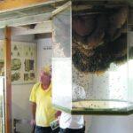 Пчелиный аквариум у себя дома