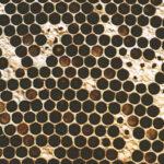 Лечение гнильцовых пчел молочной сывороткой